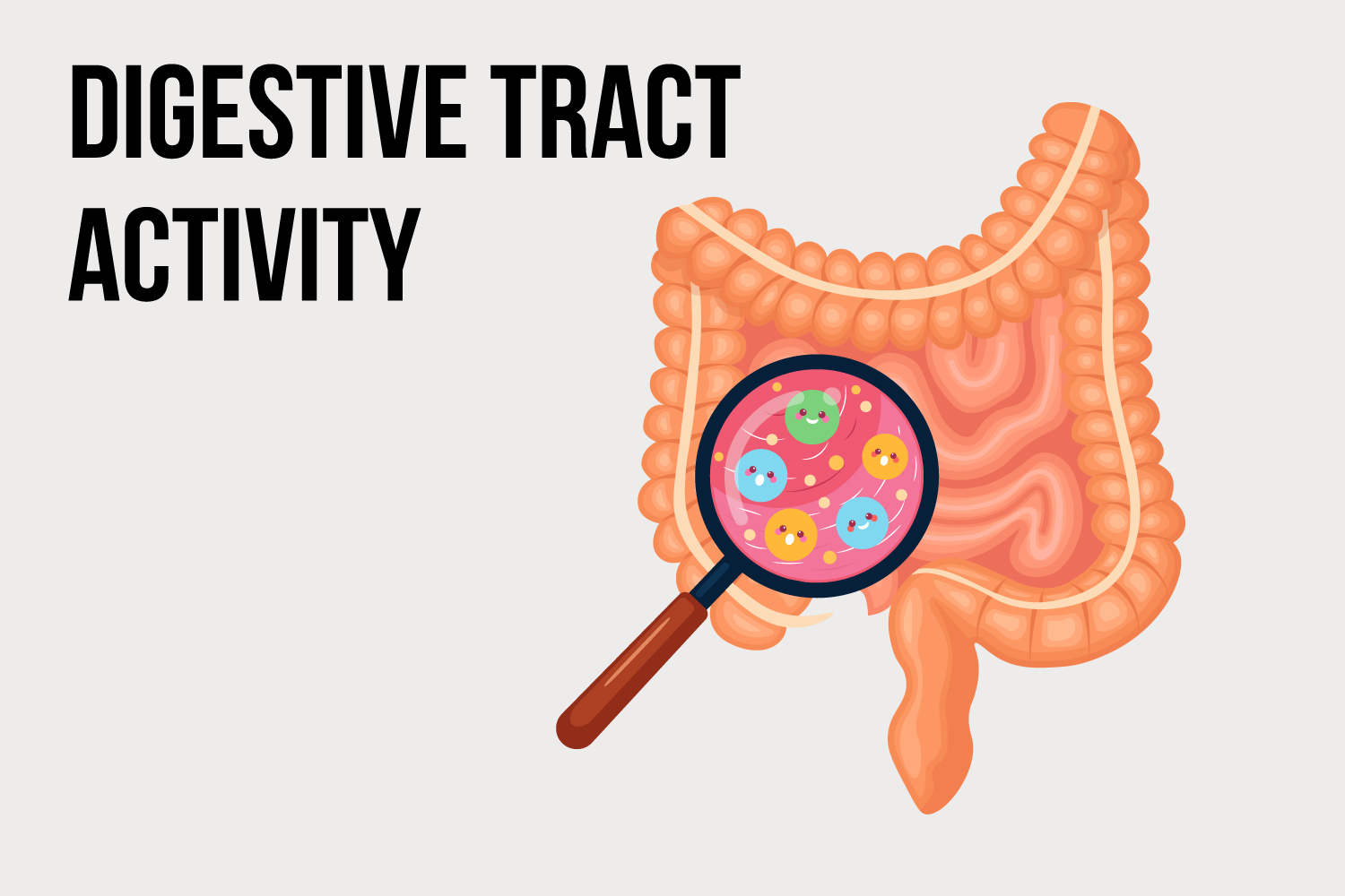 Digestive-Tract-Activity